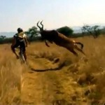 Mountain-biker-gets-taken-out-by-antelope